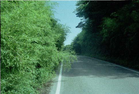 笠取峠(1992年)