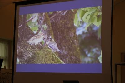八ヶ岳美術館 企画展 パラレル・ネイチャー 林正敏氏講演会 スズメがシジュウカラの雛にエサを与える