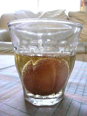 酢で卵の殻を溶かす実験(夏休みの自由研究)