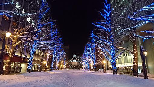 北海道庁前のホワイトイルミネーション