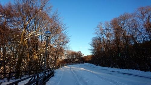 雪景色・道路