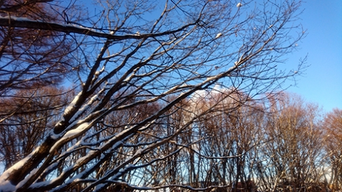 雪景色・木