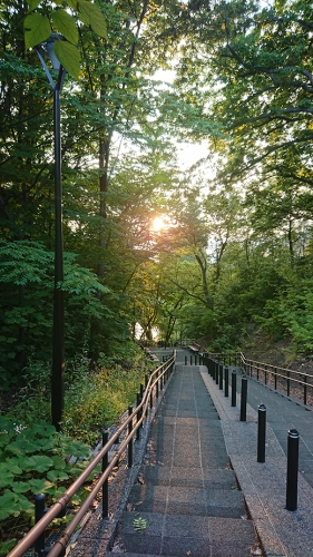 公園の長い階段