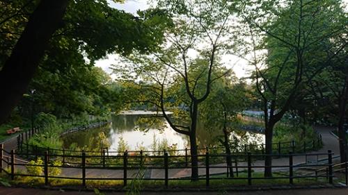 夕暮れの公園の池