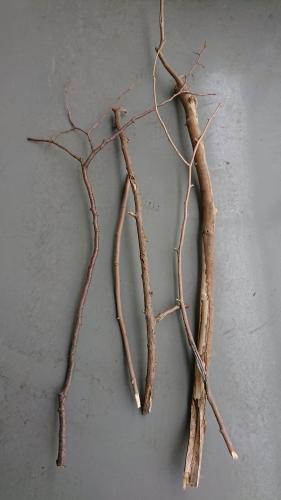 公園で拾った木の枝