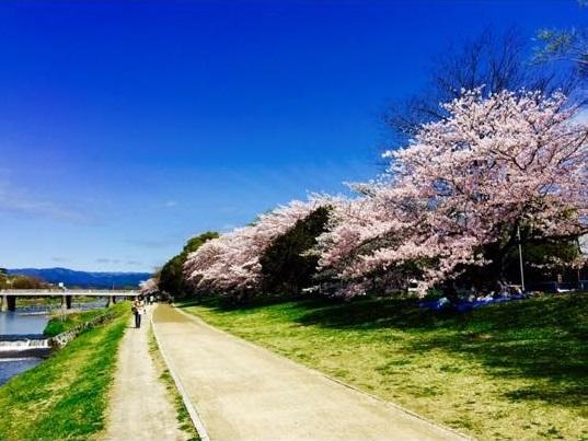 京都の桜1