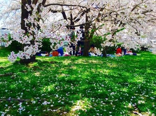 京都の桜4