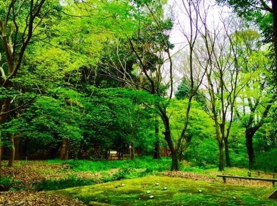 京都の桜8
