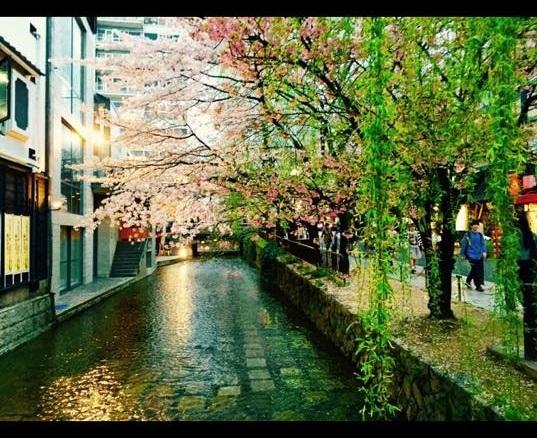 京都の桜10