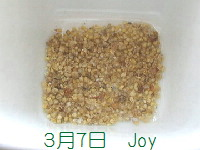 J-0307