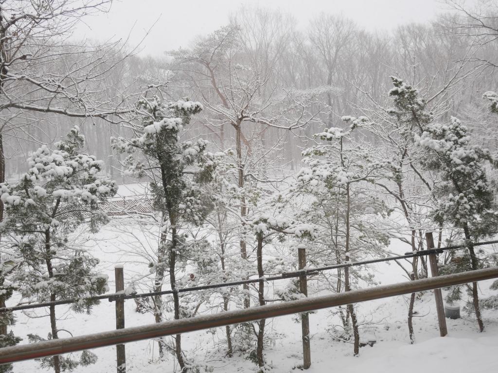 3/15 雪