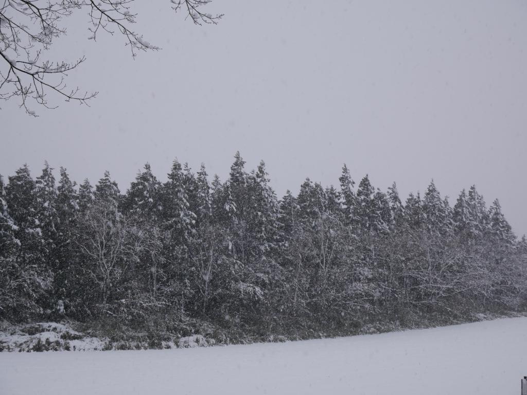 3/28雪