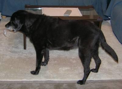 ラップの芯で遊ぶ犬