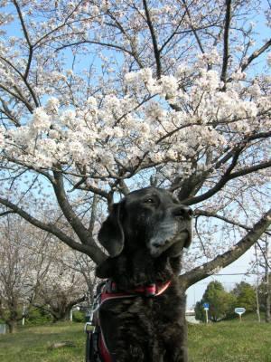 公園の桜をバックに…