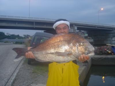 85cm真鯛