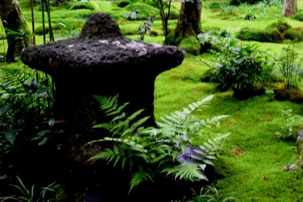 苔のある庭 1