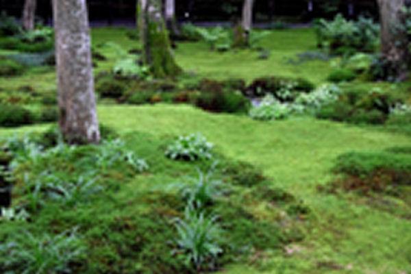 苔のある庭 3