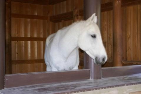 お伊勢のお馬さん