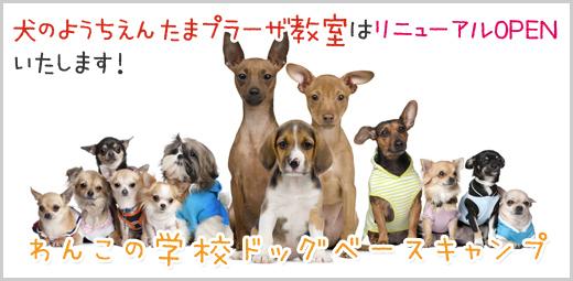 犬の幼稚園(ようちえん)たまプラーザ教室は、わんこの学校-ドッグベースキャンプ-にリニューアル致します!