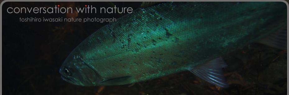 Conversation with nature|Toshihiro Iwasaki Blog
