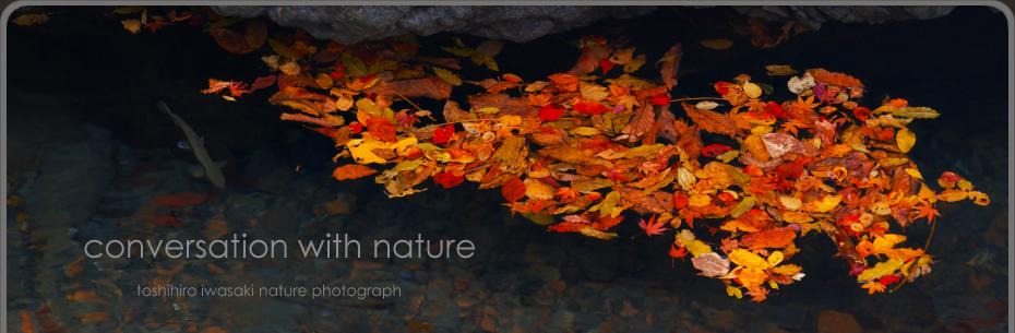 Conversation with nature��Toshihiro Iwasaki Blog