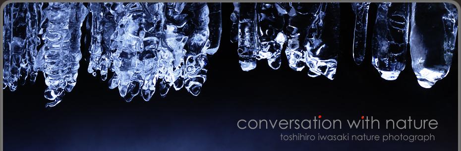 Conversation with nature Toshihiro Iwasaki Blog