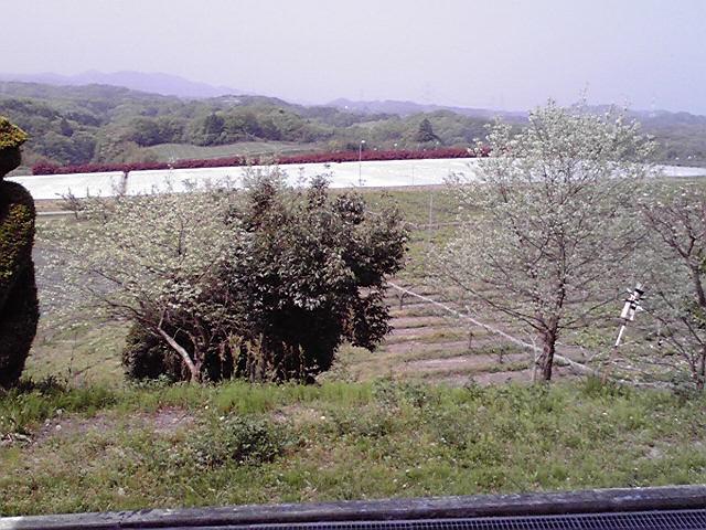 自然の景色
