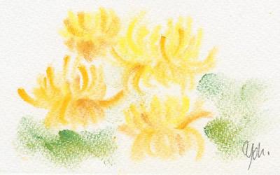 重陽節、菊花