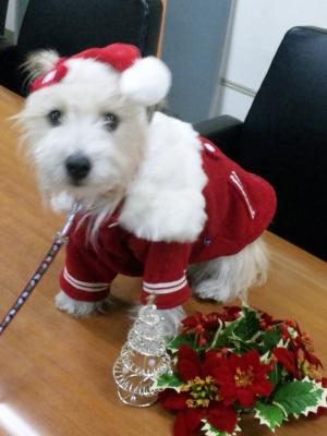 クリスマスフッフ−