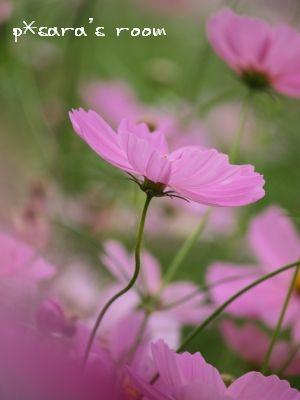 幻想ピンク