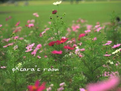 野の花のように