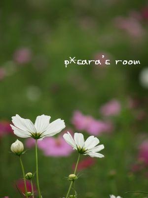 清楚に咲く花