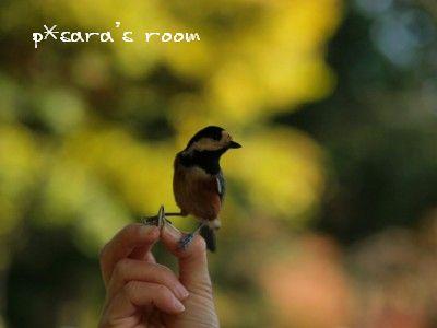 鳥の餌付け