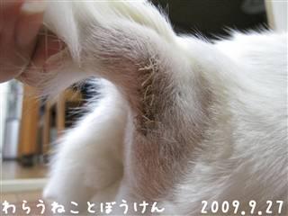 冬・縫合部分090927