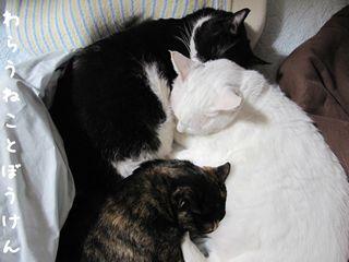 四季猫100515