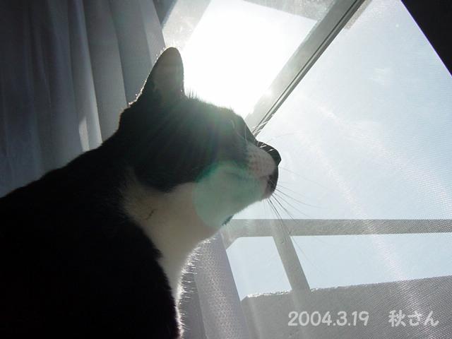 秋さん20040319