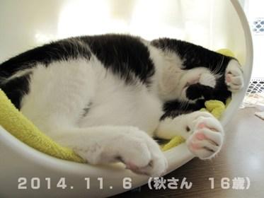 秋さん20141106