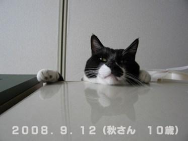 秋さん20080812