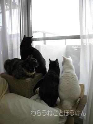四季猫20060521