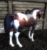 まだら馬2