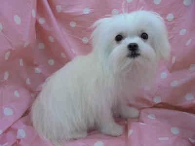 富山 ミックス犬