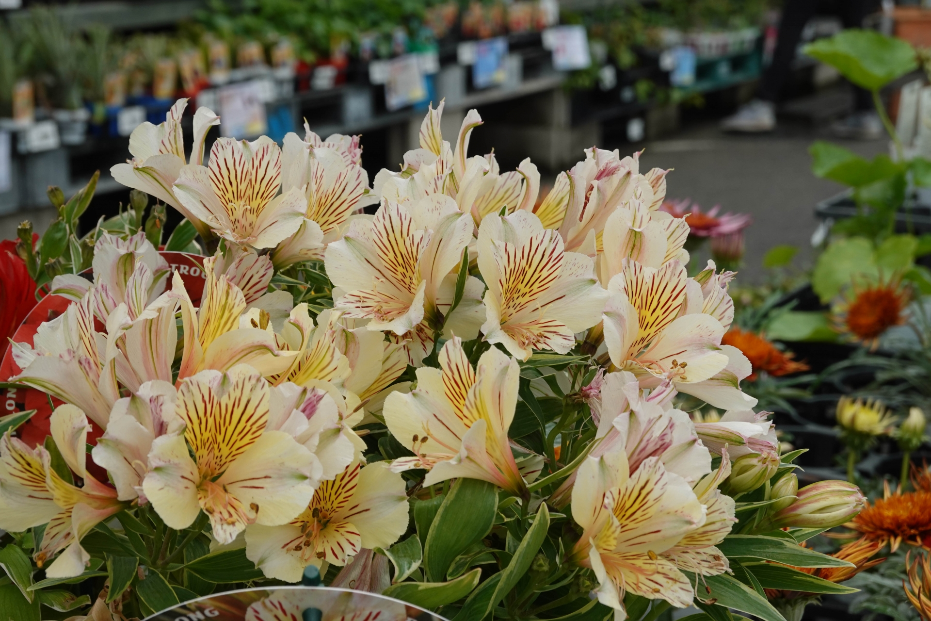 ホームワイド店頭の花