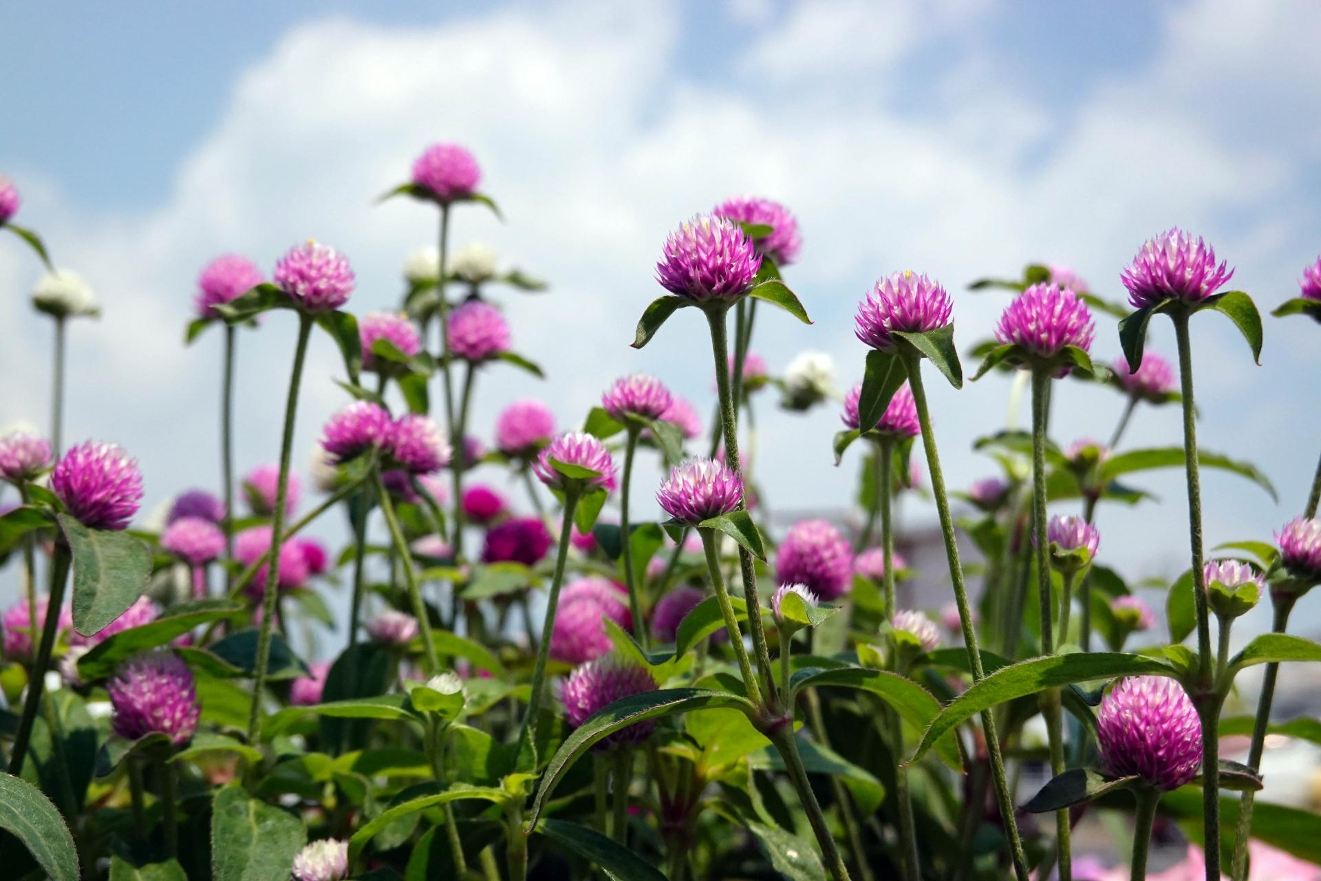 ホームワイドの花