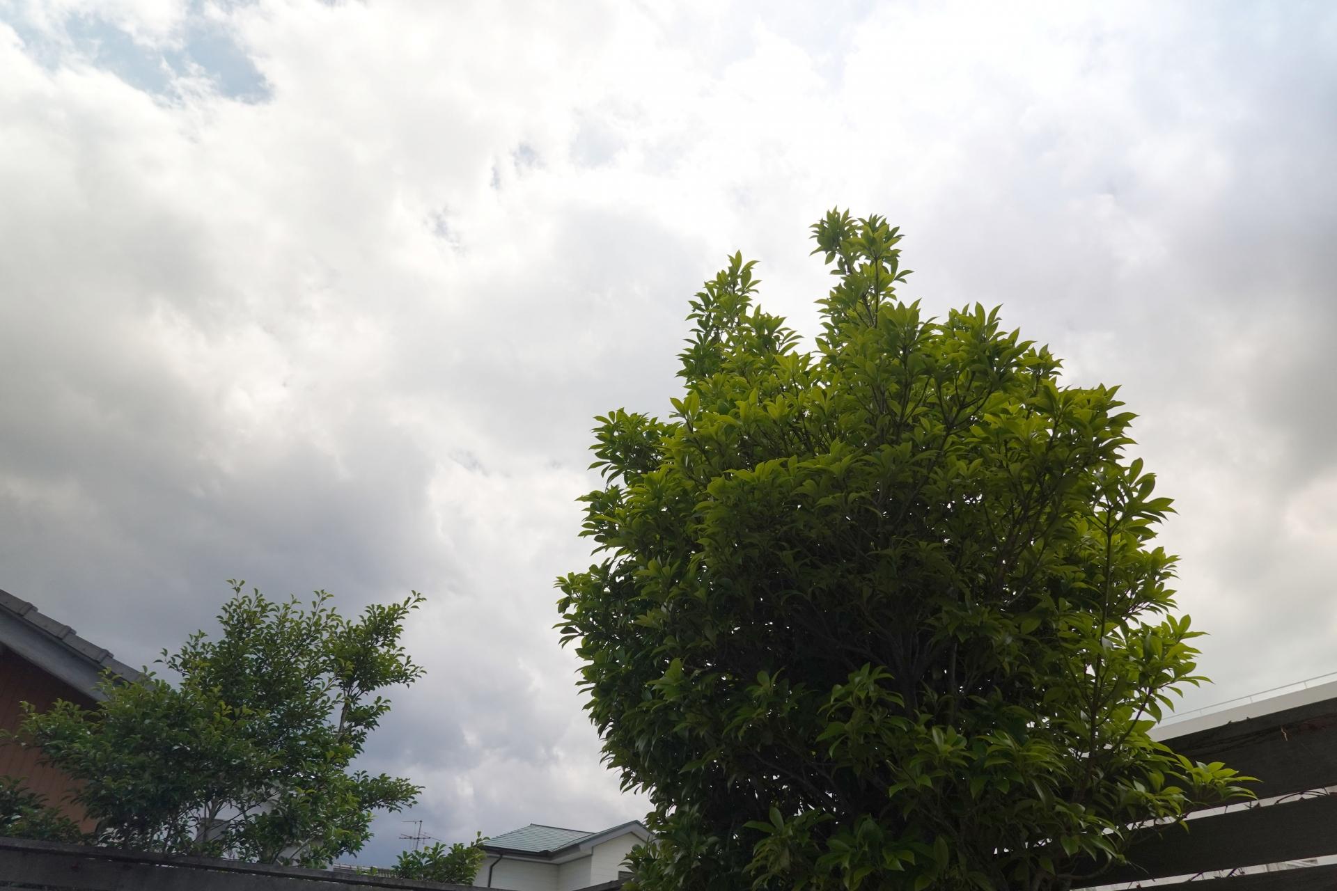 曇り始めた午後