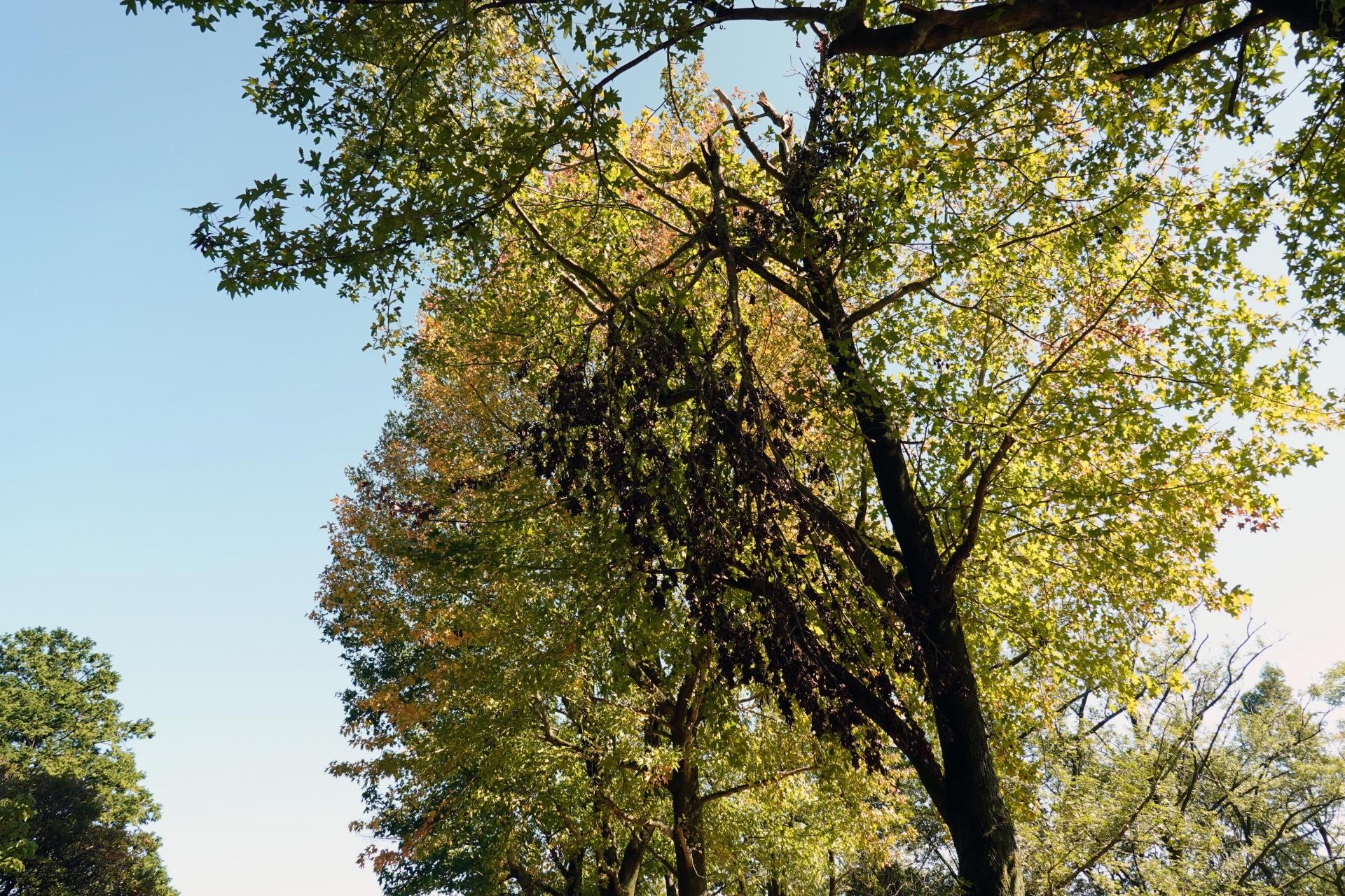 折れた木の枝