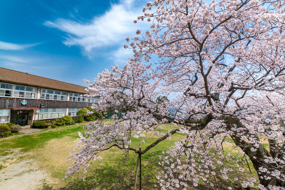 20160412_1740790(春の内海府小学校).jpg