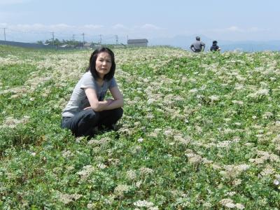 直海浜海岸の花畑.JPG