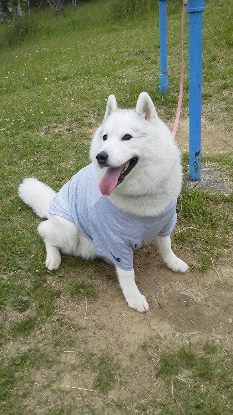 先日、わき腹の出来物を調べてもらうため手術しました。包帯の代わりにこんな物を着せられて・・・実は大迷惑だろうな~