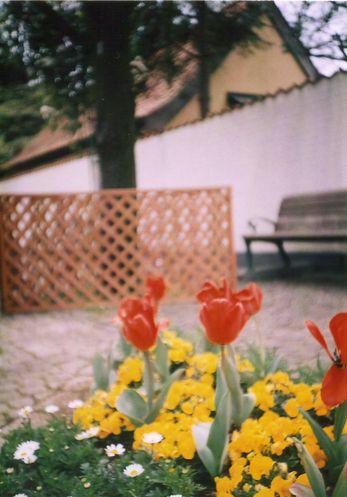 お花見@アンデルセン公園(LOMO)