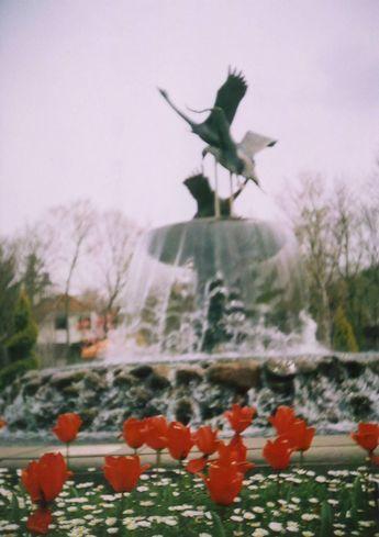 お花見@アンデルセン公園2(LOMO)